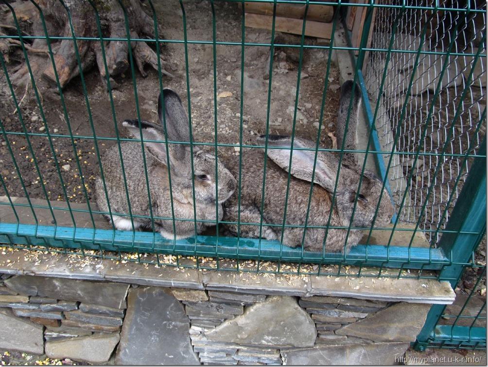 Громадные хитрюги-кролики