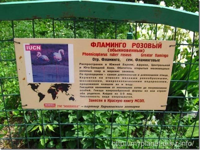Табличка с информацией о фламинго розовом