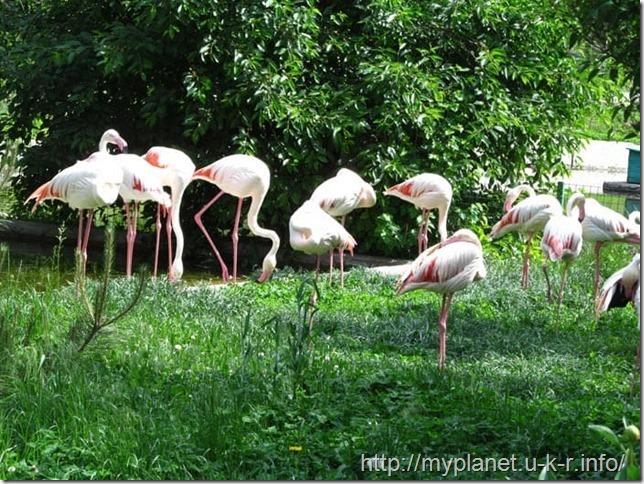 Стая розовых фламинго на поляне