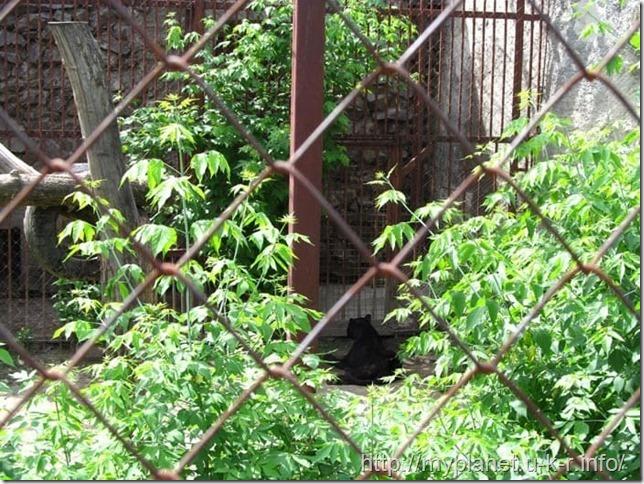 В клетке с описанием ягуара оказался какой-то черный кот. Может пантера?