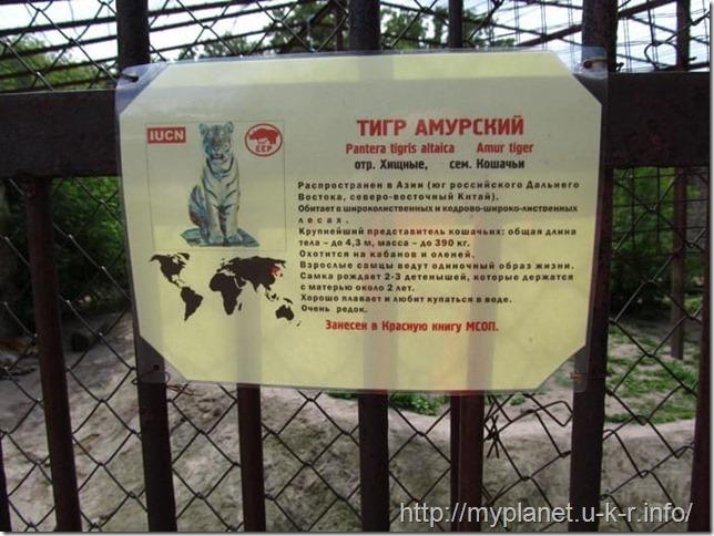 Вывеска с тигром амурским