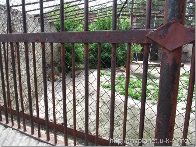 А вот и сами тигры - где-то там .... вдалике... отдыхают