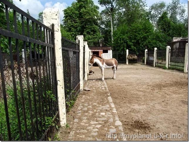 Миленькая лошадка - не то кулан туркменский, не то кианг