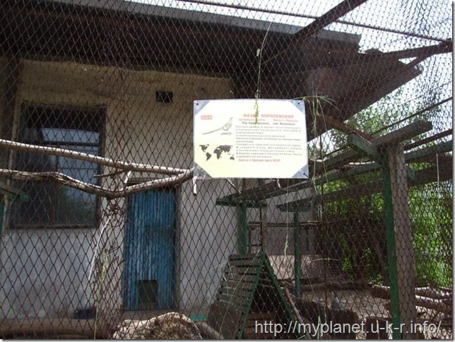 Описание Королевского фазана