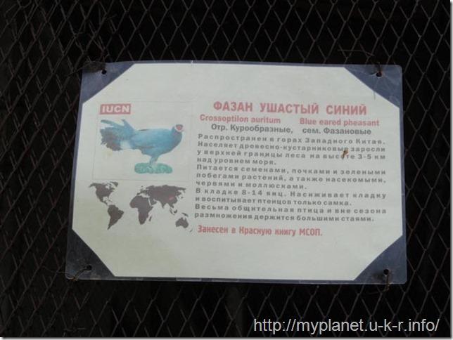 Табличка о фазане ушастом синем
