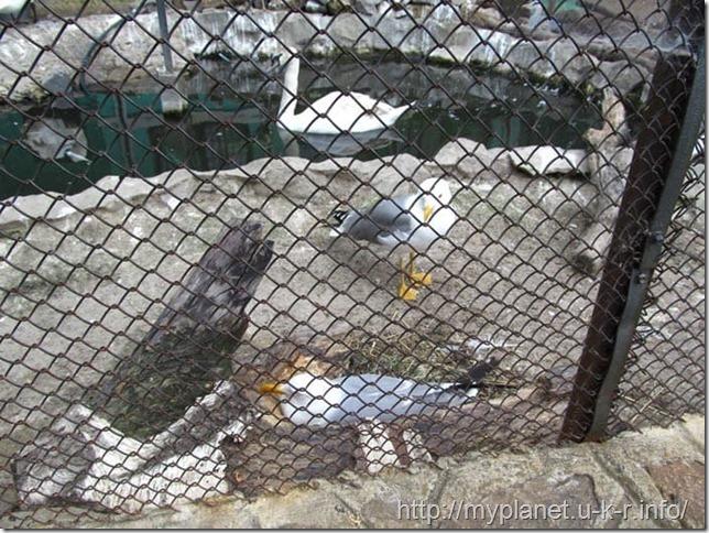 Обычная чайка, которых в Одессе немерянно