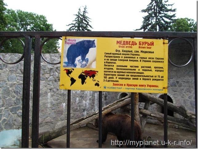 Описание бурых медведей