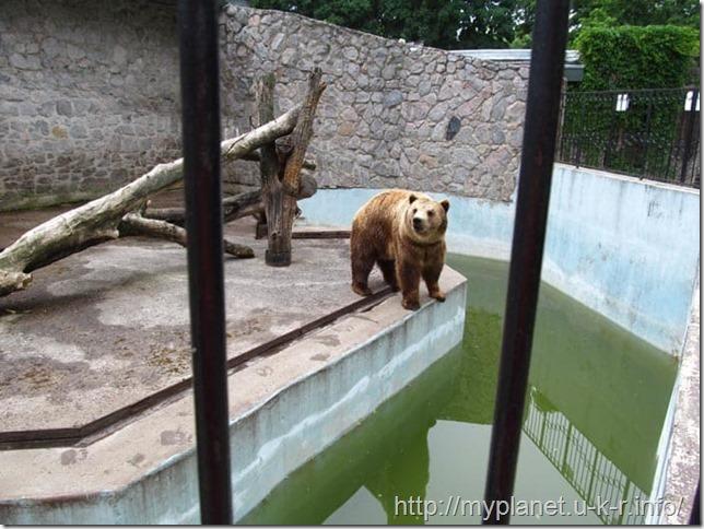 Бурый медведь собственной персоной
