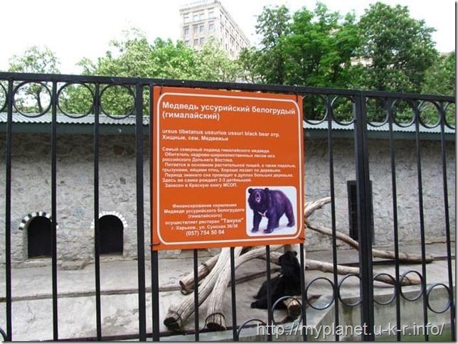 Информация про гималайского медведя