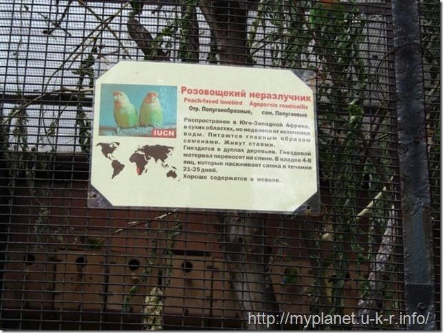 Горластые попугайчики - Розовощекий Неразлучник