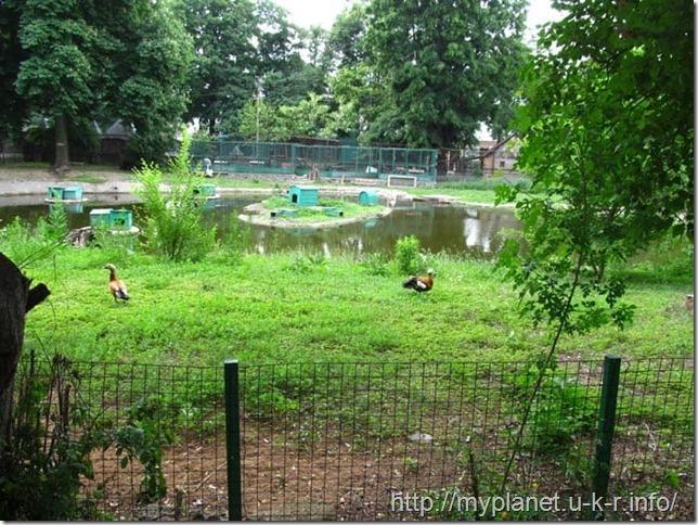Красивая поляна для водных птиц