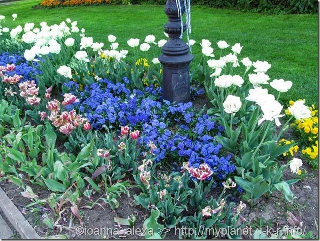 Еще одна яркая цветочная клумба в Кошице