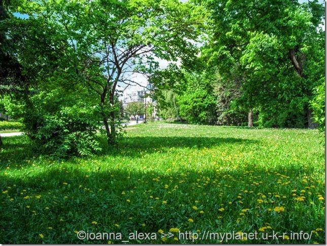 Поляна с молодой сочной весенней травой и одуванчиками в парке Кошице