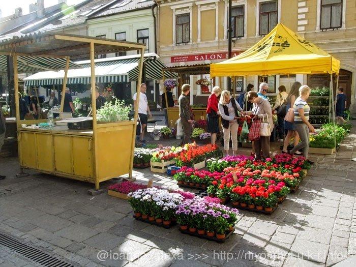 Цветочный рынок на Доминиканской площади в Кошице