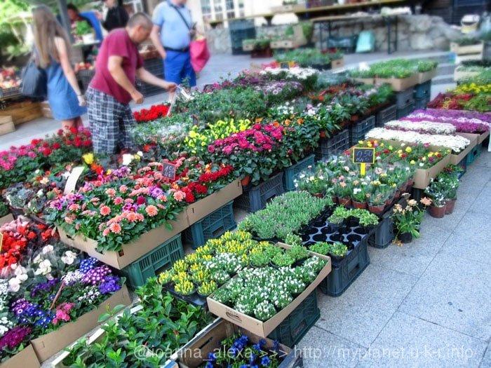 Торговля разнообразными цветами в вазонах на улице