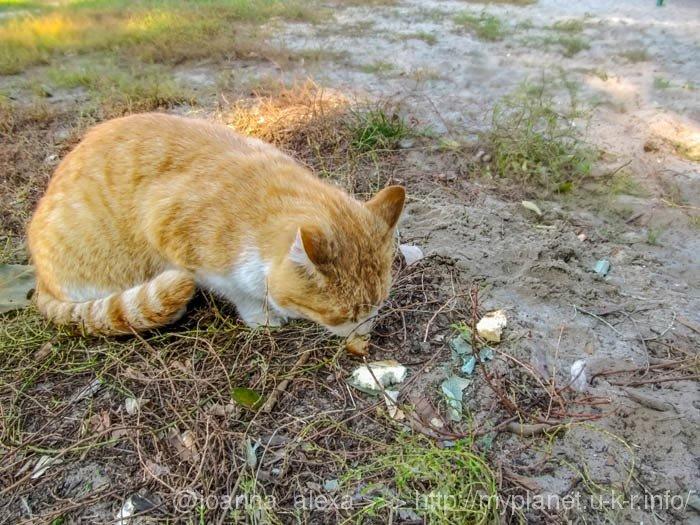 Новый друг – рыжий кот выпросил еду