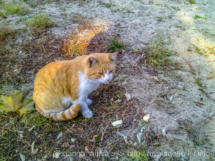 Бездомные коты в Киеве хлеб не едят