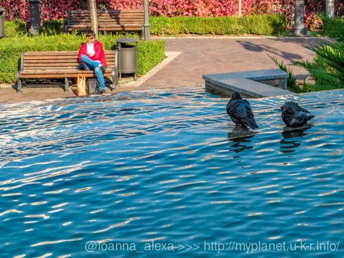 Голуби купаются в фонтане в парке Гейдара Алиева