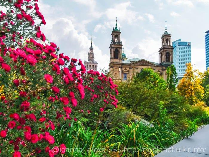 Мне, просто, нравится это фото Варшавы с осенними яркими цветами