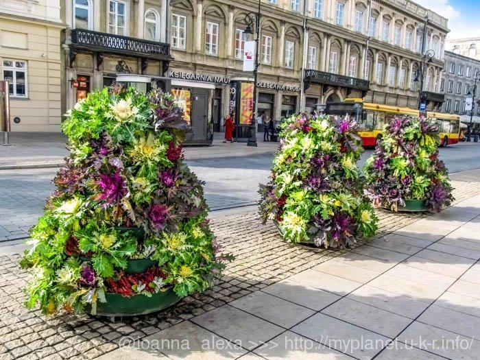 Своеобразные вертикальные клумбы из декоративной капусты на улицах в Варшаве